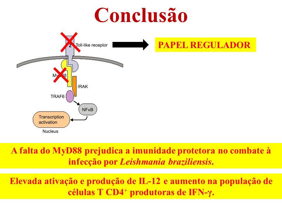 Conclusão 2 A falta do MyD88 prejudica a imunidade protetora no combate à infecção por Leishmania braziliensis.