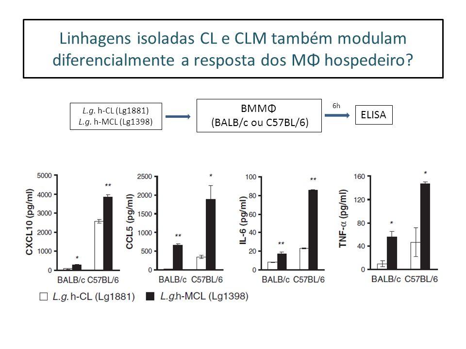 Linhagens isoladas CL e CLM também modulam diferencialmente a resposta dos MΦ hospedeiro.