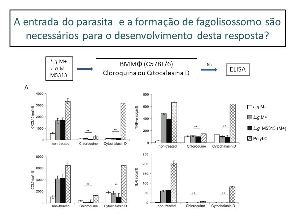 A entrada do parasita e a formação de fagolisossomo são necessários para o desenvolvimento desta resposta.