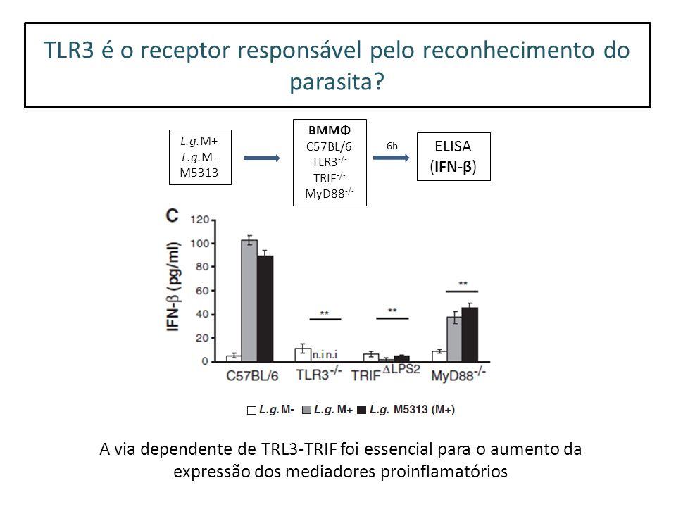 TLR3 é o receptor responsável pelo reconhecimento do parasita.
