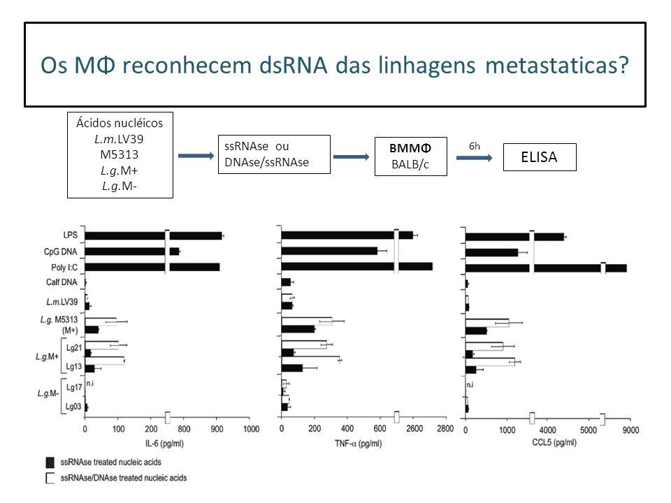 Os MΦ reconhecem dsRNA das linhagens metastaticas.