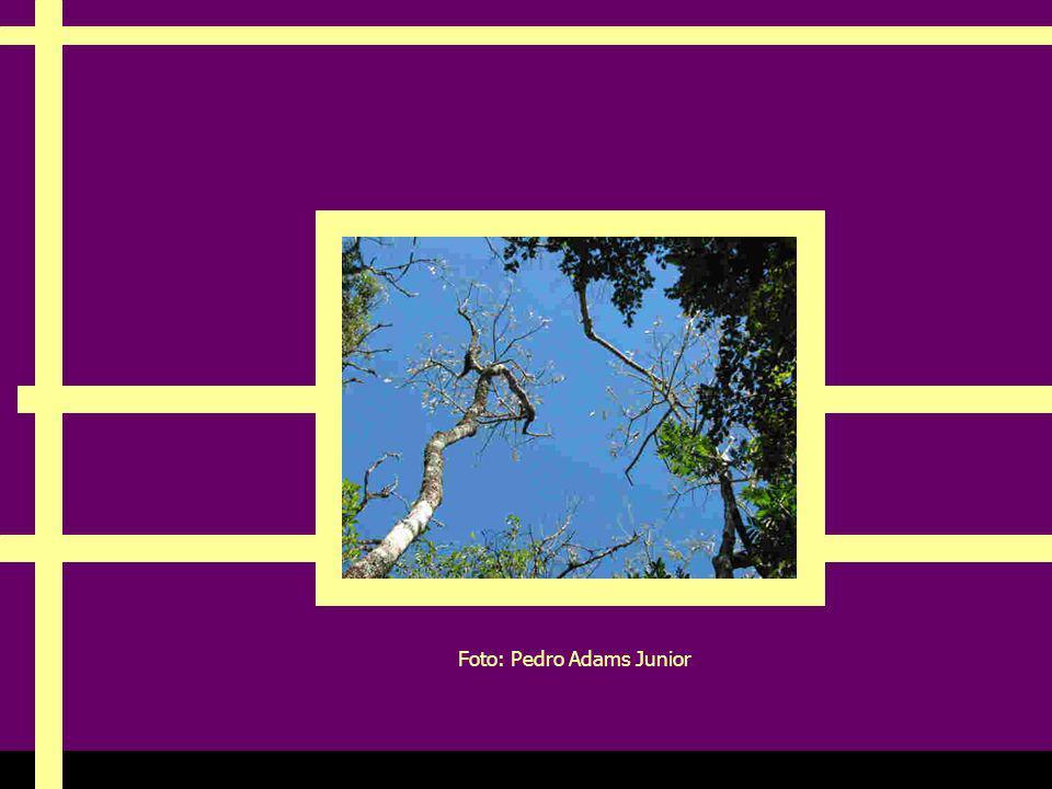 Ria Slides Foto: Pedro Adams Junior