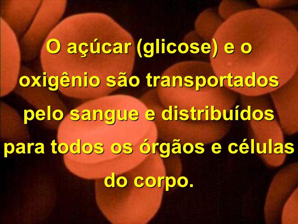 Copyright © RHVIDA S/C Ltda. www.rhvida.com.br O açúcar (glicose) e o oxigênio são transportados pelo sangue e distribuídos para todos os órgãos e cél