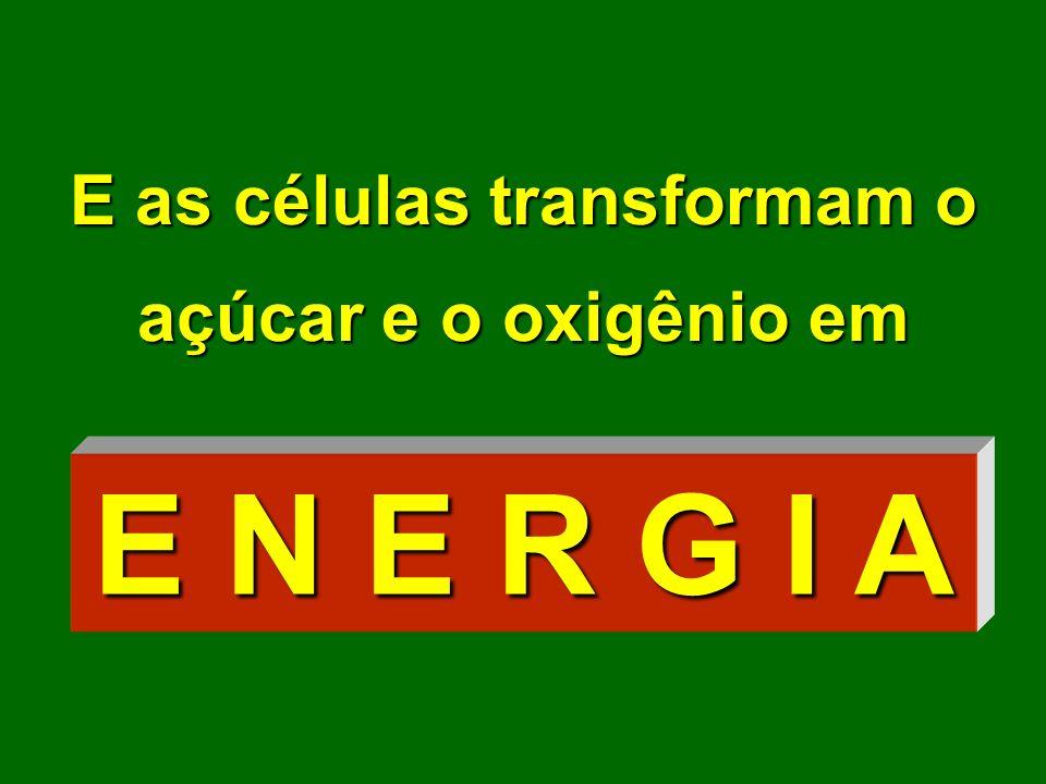 E as células transformam o açúcar e o oxigênio em E N E R G I A
