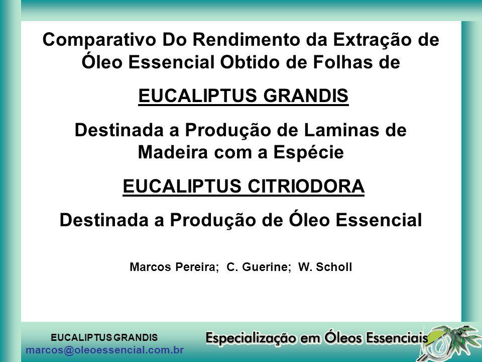 EUCALIPTUS GRANDIS marcos@oleoessencial.com.br Comparativo Do Rendimento da Extração de Óleo Essencial Obtido de Folhas de EUCALIPTUS GRANDIS Destinad