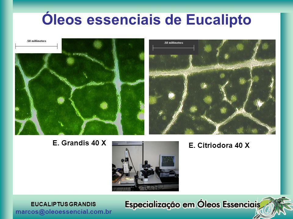 EUCALIPTUS GRANDIS marcos@oleoessencial.com.br Óleos essenciais de Eucalipto E. Grandis 40 X E. Citriodora 40 X