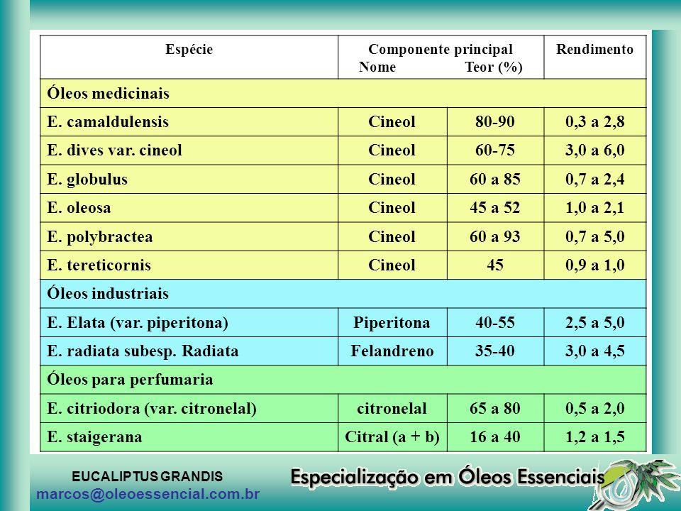 EUCALIPTUS GRANDIS marcos@oleoessencial.com.br EspécieComponente principal Nome Teor (%) Rendimento Óleos medicinais E. camaldulensisCineol80-900,3 a