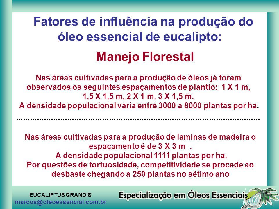 EUCALIPTUS GRANDIS marcos@oleoessencial.com.br Fatores de influência na produção do óleo essencial de eucalipto: Manejo Florestal Nas áreas cultivadas
