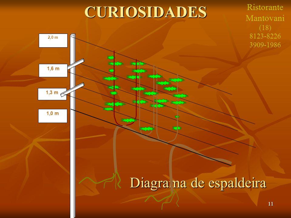 11 Diagrama de espaldeira Diagrama de espaldeiraCURIOSIDADES 1,3 m 1,0 m 1,6 m 2,0 m Ristorante Mantovani (18) 8123-8226 3909-1986