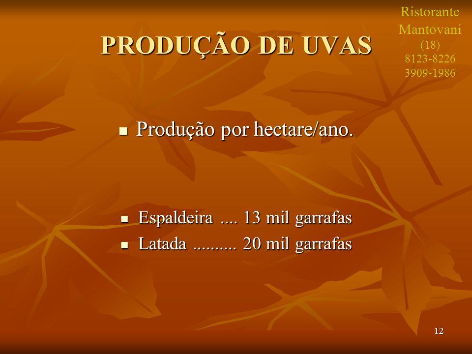 12 PRODUÇÃO DE UVAS Produção por hectare/ano. Produção por hectare/ano. Espaldeira.... 13 mil garrafas Espaldeira.... 13 mil garrafas Latada..........