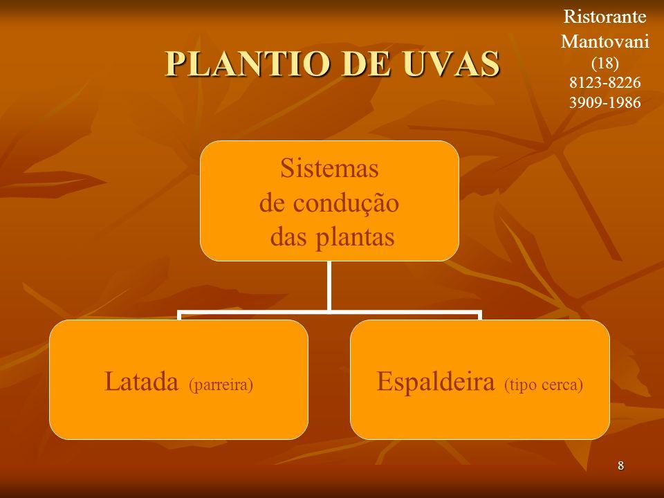 8 PLANTIO DE UVAS Sistemas de condução das plantas Latada (parreira) Espaldeira (tipo cerca) Ristorante Mantovani (18) 8123-8226 3909-1986