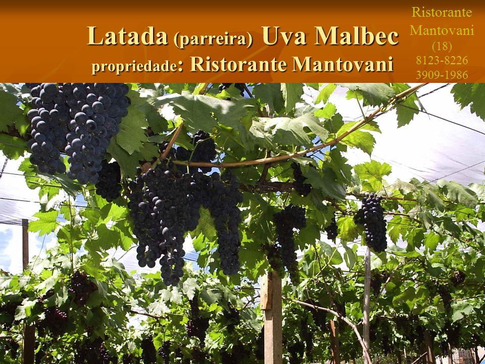 9 Latada (parreira) Uva Malbec propriedade : Ristorante Mantovani Ristorante Mantovani (18) 8123-8226 3909-1986