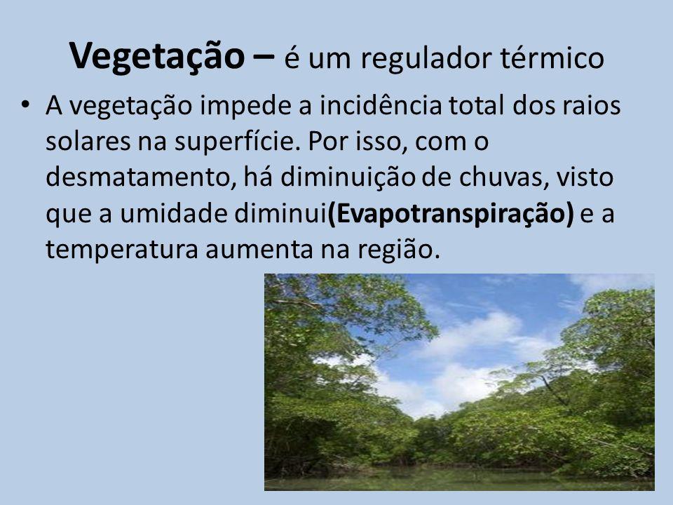 Vegetação – é um regulador térmico A vegetação impede a incidência total dos raios solares na superfície. Por isso, com o desmatamento, há diminuição
