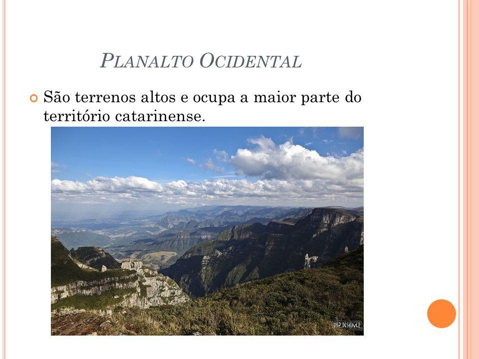 P LANALTO O CIDENTAL São terrenos altos e ocupa a maior parte do território catarinense.