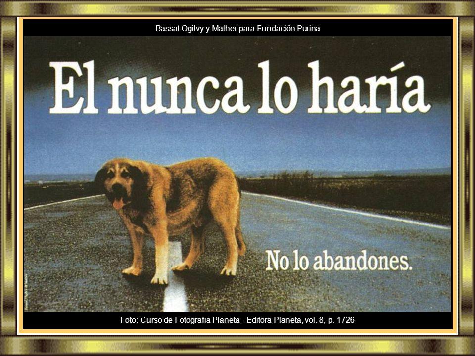 SUIPA Cão resgatado pela SUIPA
