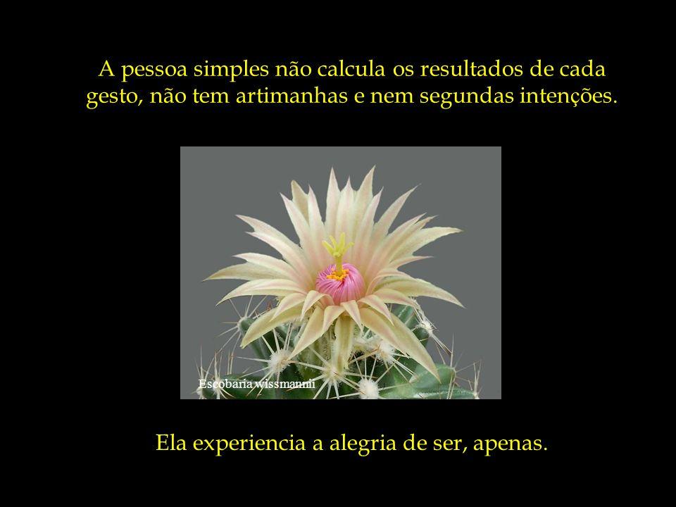 Escobaria minima O simples é aquele que não simula ser o que não é, que não d á demasiada importância a sua imagem, ao que os outros dizem ou pensam d