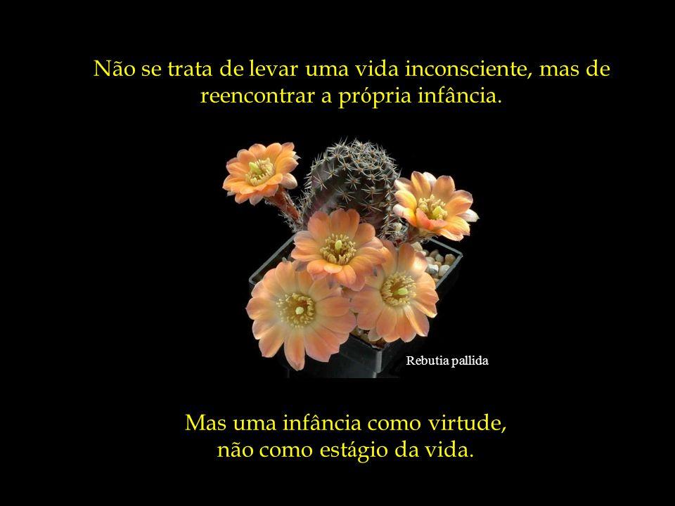 Escobaria wissmannii A pessoa simples não calcula os resultados de cada gesto, não tem artimanhas e nem segundas inten ç ões. Ela experiencia a alegri