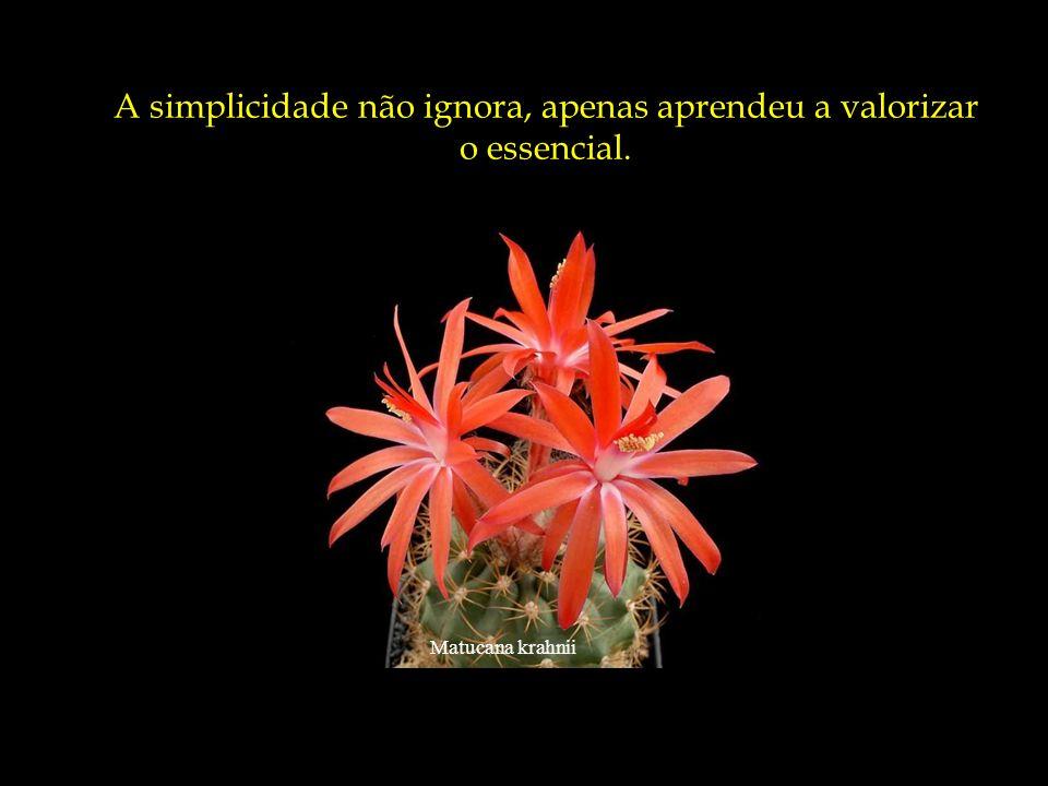 Mammillaria albiflora Uma infância que não se angustia com as d ú vidas de quem ainda tem tudo por fazer e conhecer.