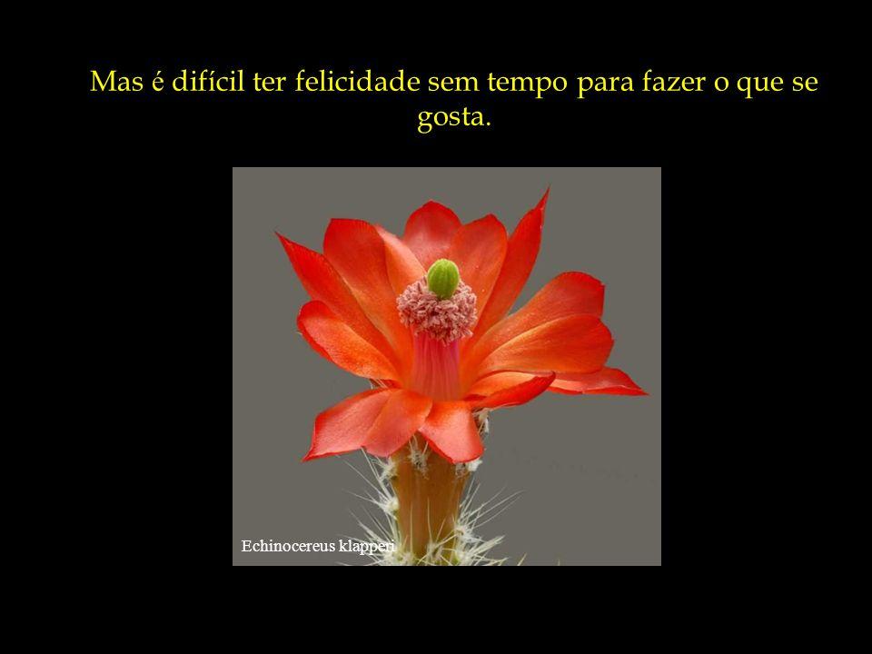 Discocactus pugionacanthus Não é necess á rio ter muito dinheiro ou ser importante para ser feliz.