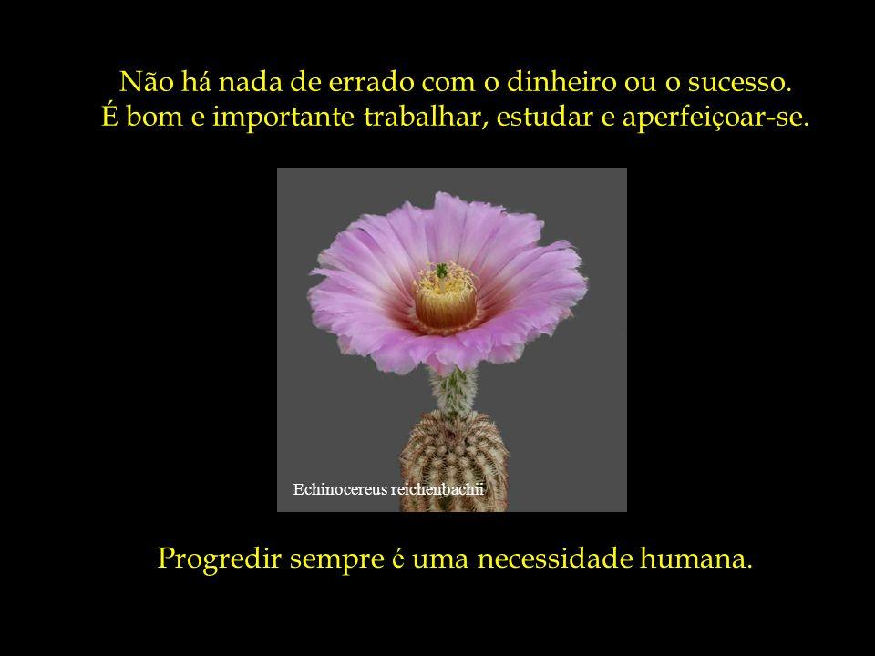 Echinocereus klapperi Mas é dif í cil ter felicidade sem tempo para fazer o que se gosta.