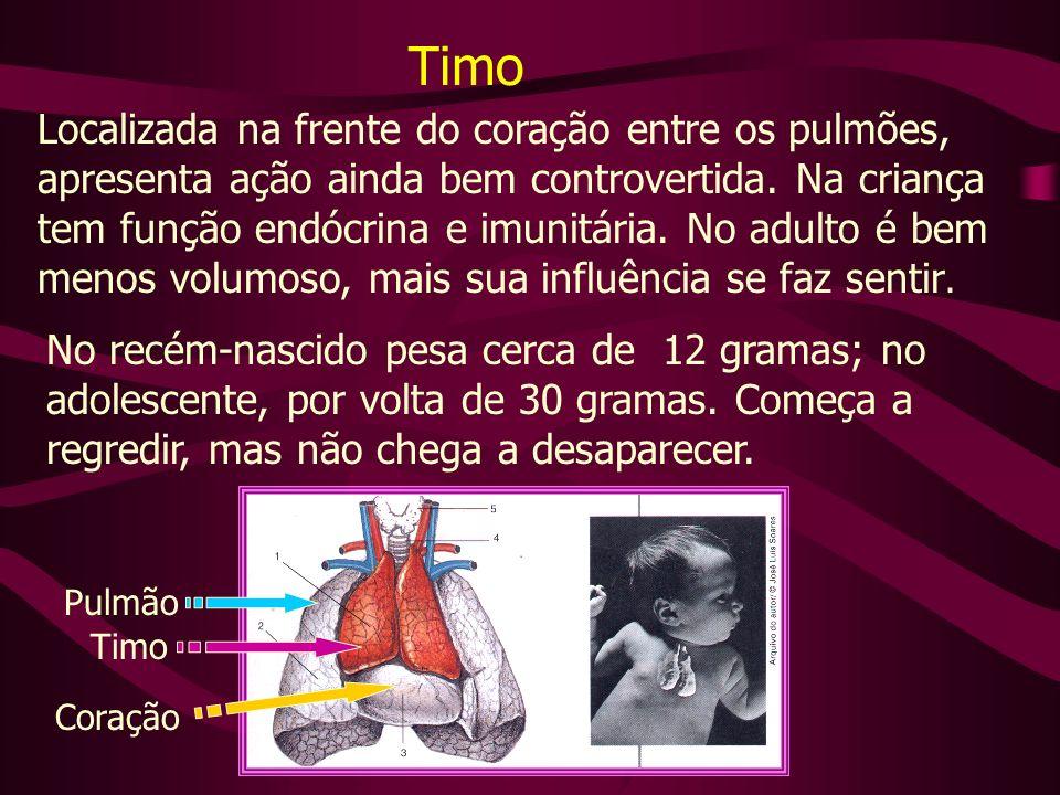 Você assistiu 6 dos 17 slides dessa apresentação sobre glândulas I.