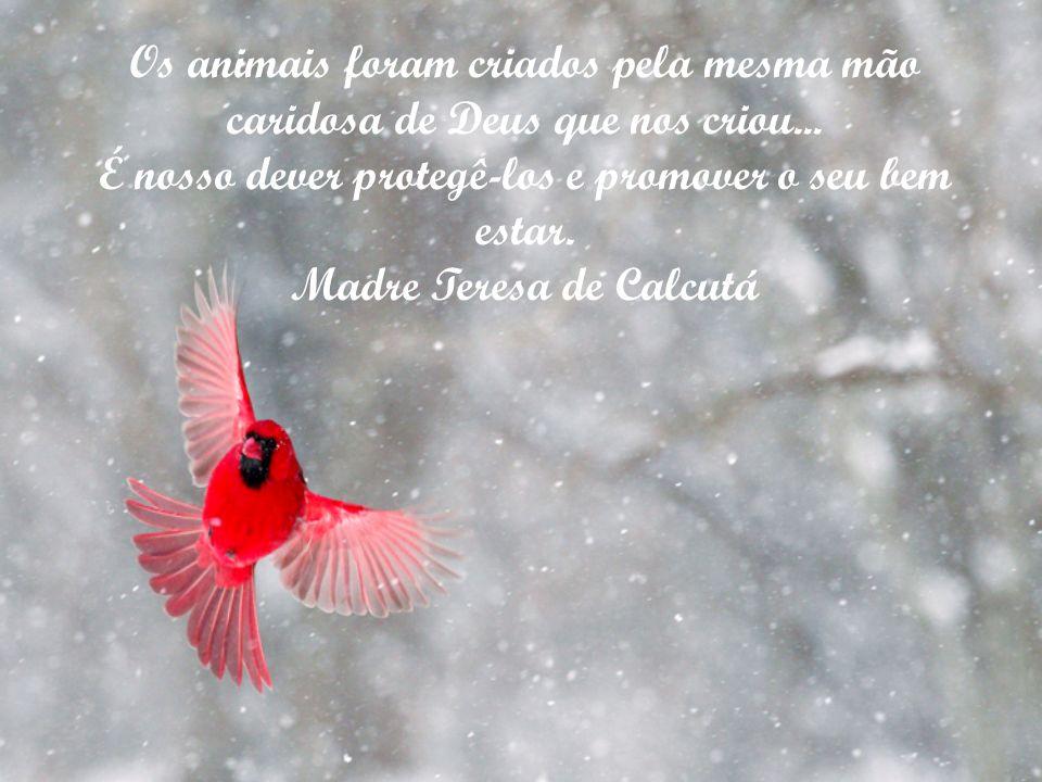 Chegará o dia em que o homem conhecerá o íntimo de um animal. E, nesse dia, todo o crime contra um animal será um crime contra a humanidade. Leonardo
