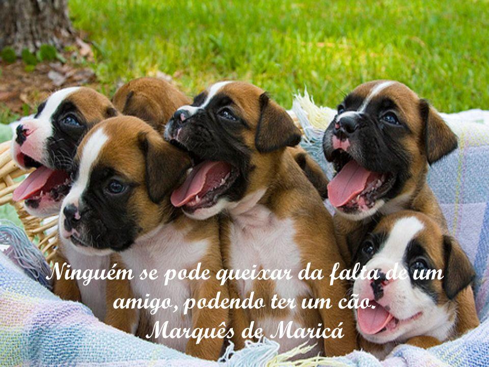 Só quem teve um cão sabe o que é ser amado. Friedrich Nietzsche