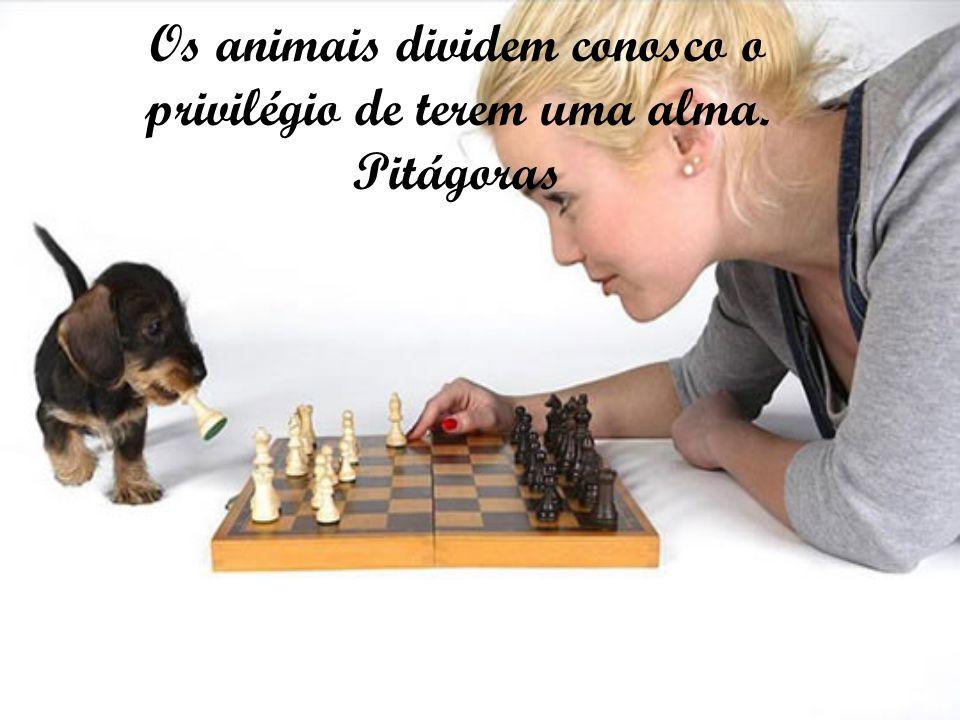 Entre a brutalidade para com o animal e a crueldade para com o homem, há uma só diferença: a vítima.