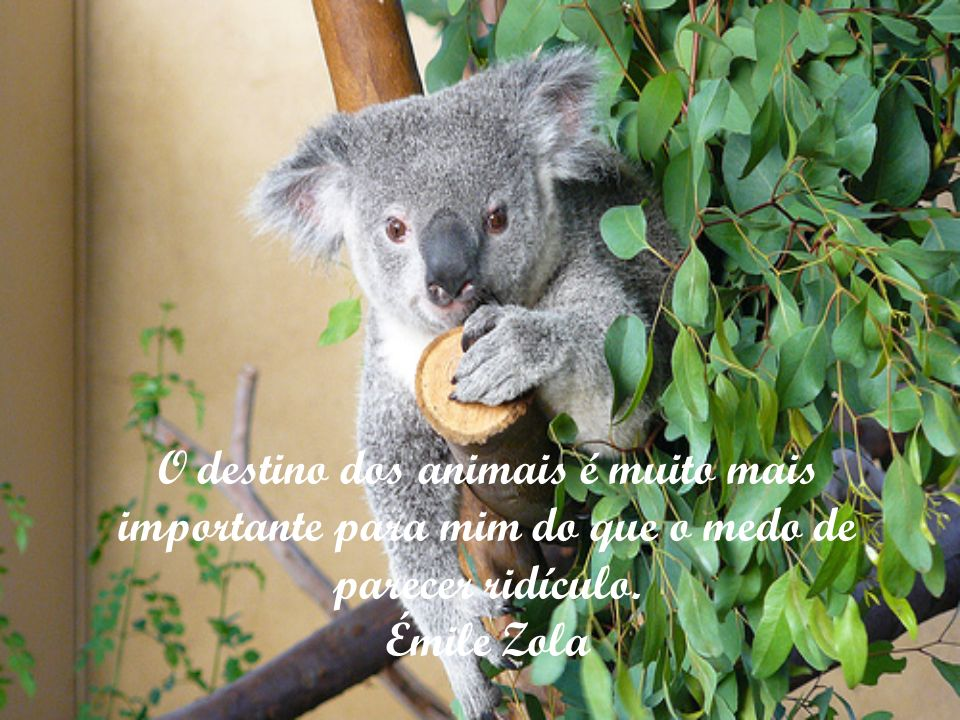 O cão é a virtude que, impedida de tomar forma humana, fez-se animal. Victor Hugo
