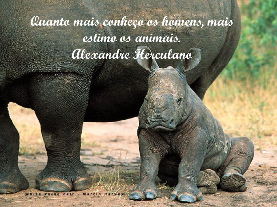 Ao estudar as características e a índole dos animais, encontrei um resultado humilhante para mim. Mark Twain