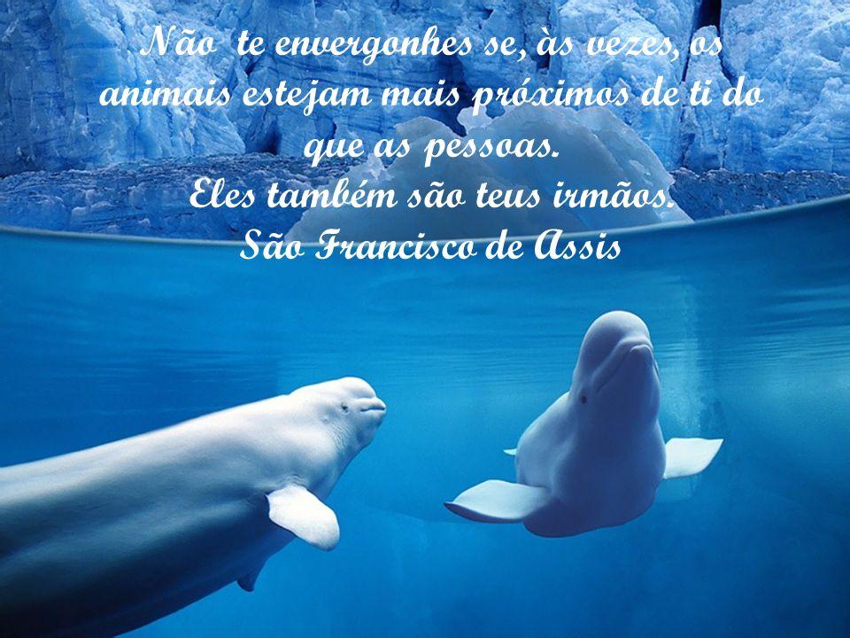 O homem tem feito na terra um inferno para os animais. Arthur Schopenhauer