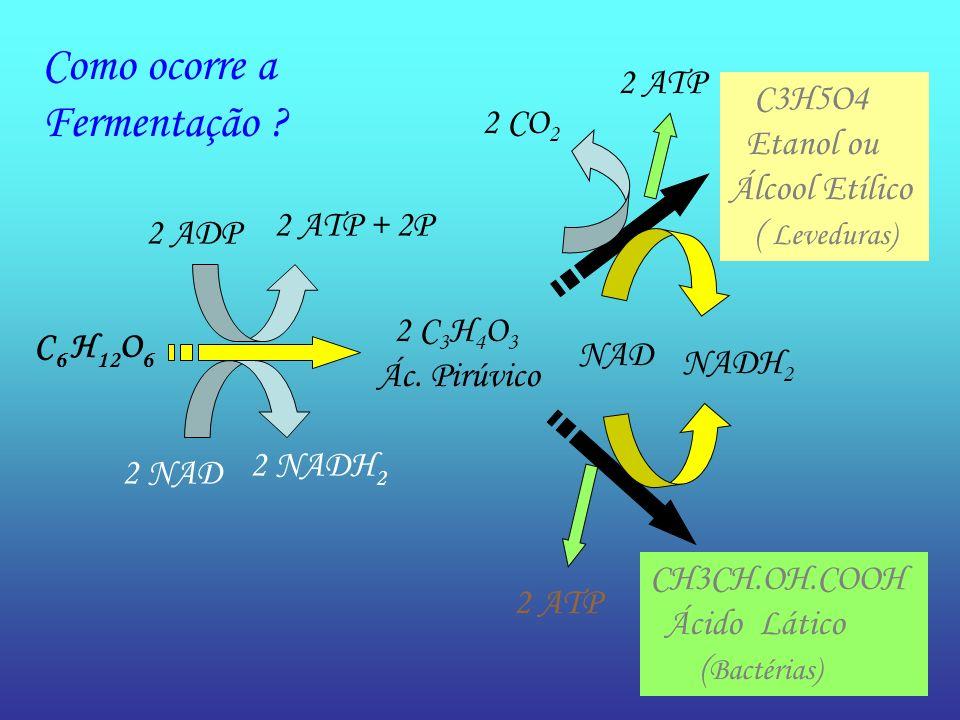 C 6 H 12 O 6 2 ATP + 2P 2 ADP 2 NADH 2 2 NAD 2 C 3 H 4 O 3 Ác. Pirúvico 2 CO 2 C3H5O4 Etanol ou Álcool Etílico ( Leveduras) CH3CH.OH.COOH Ácido Lático