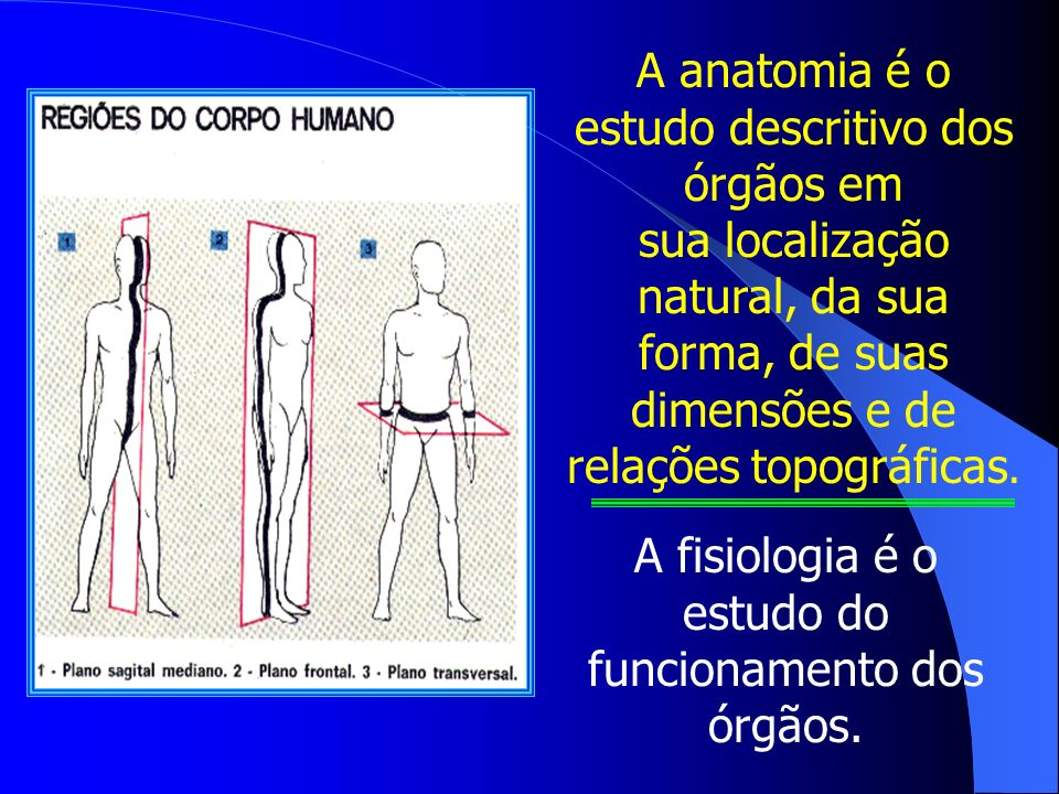 A anatomia é o estudo descritivo dos órgãos em sua localização natural, da sua forma, de suas dimensões e de relações topográficas.