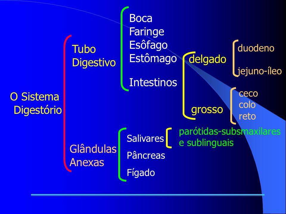 O Sistema Digestório Tubo Digestivo Glândulas Anexas Boca Faringe Esôfago Estômago Intestinos delgado grosso duodeno jejuno-íleo ceco colo reto Salivares Pâncreas Fígado parótidas-subsmaxilares e sublinguais
