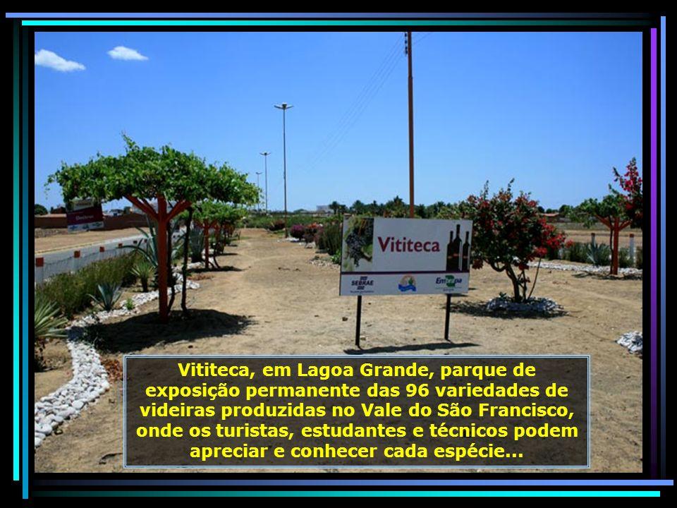 Parque da Uva e Vinho, local onde se realiza a VINHUVA FEST, a cada dois anos. Nela se reúnem produtores de uvas e de vinhos numa grande festa, atrain