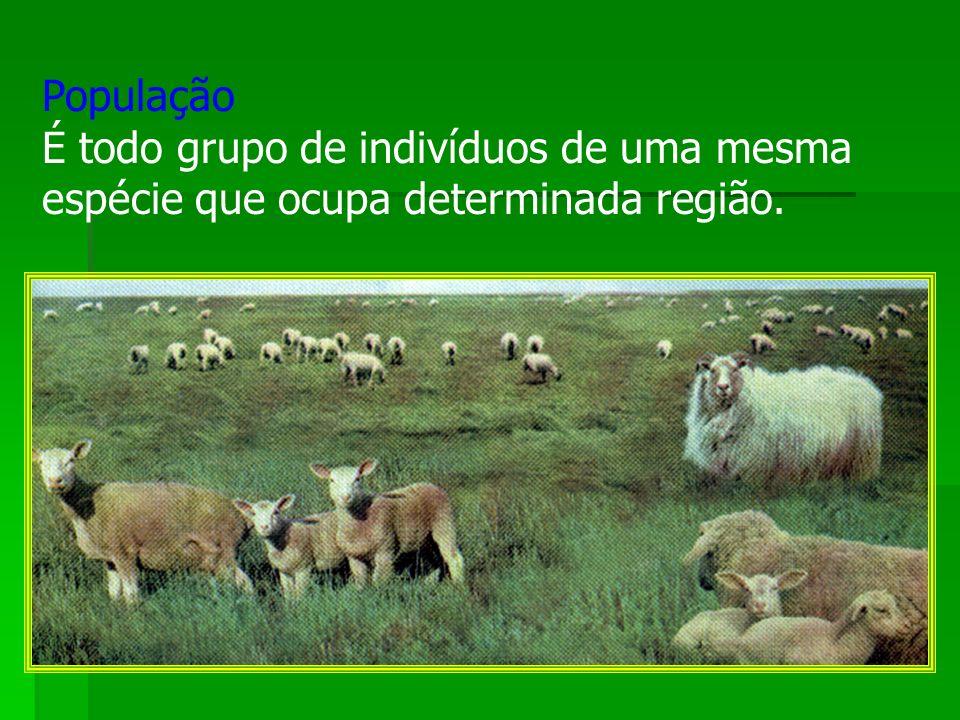 População É todo grupo de indivíduos de uma mesma espécie que ocupa determinada região.