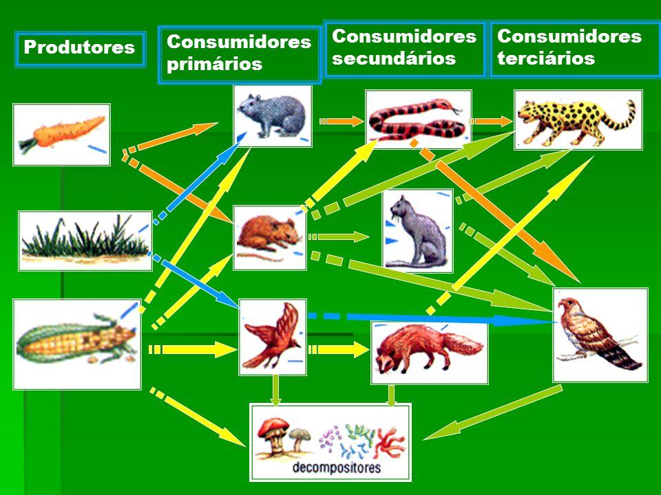 Você assistiu 7 dos 30 slides dessa apresentação sobre ecologia.