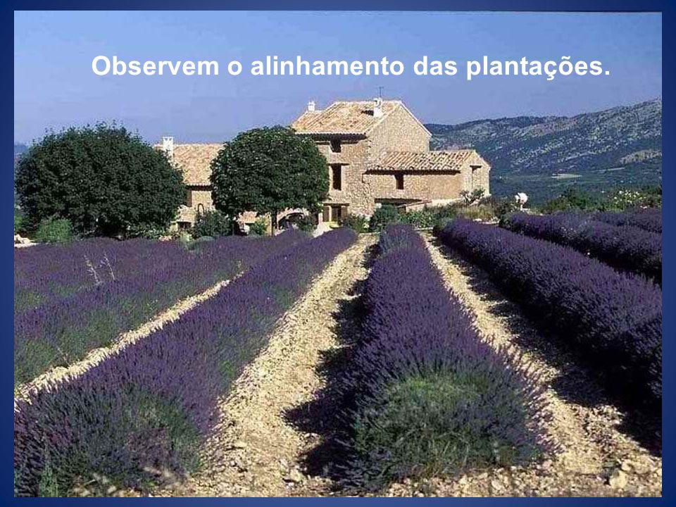 Observem o alinhamento das plantações.