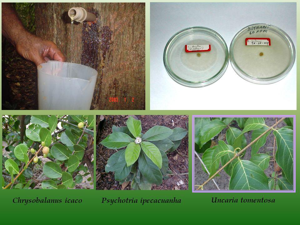 Chrysobalanus icacoPsychotria ipecacuanha Uncaria tomentosa