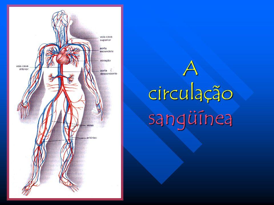 Coração e vasos sangüíneos constituem o sistema circulatório, cuja finalidade é o transporte de substâncias pelo corpo, garantindo a chegada de nutrientes e oxigênio a todas as células e responsabilizando-se pela remoção dos detritos nocivos.