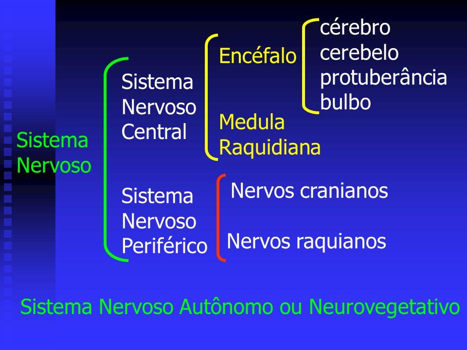 Sistema Nervoso Sistema Nervoso Central Sistema Nervoso Periférico Encéfalo Medula Raquidiana Nervos cranianos Nervos raquianos cérebro cerebelo protu