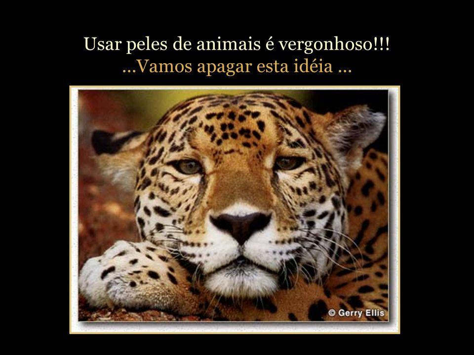 Matar animais por esporte, prazer, aventura e por suas peles é repugnante!!! Não há justificativa na satisfação de uma brutalidade dessas. - Dalai lam