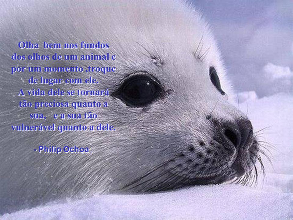 Em meu pensamento, a vida de um cordeiro não é menos importantante que a de um ser humano. - Mahatma Gandhi -