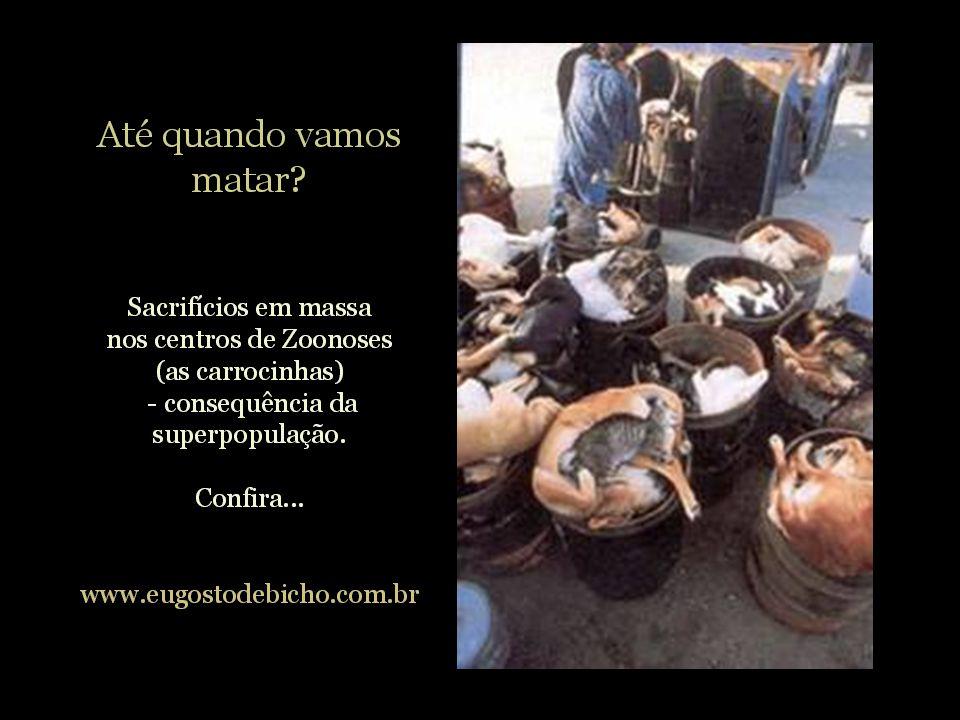 CARROCINHAS Holocausto!!! Mais um crime que envergonha o Brasil !!! www.pea.org.br