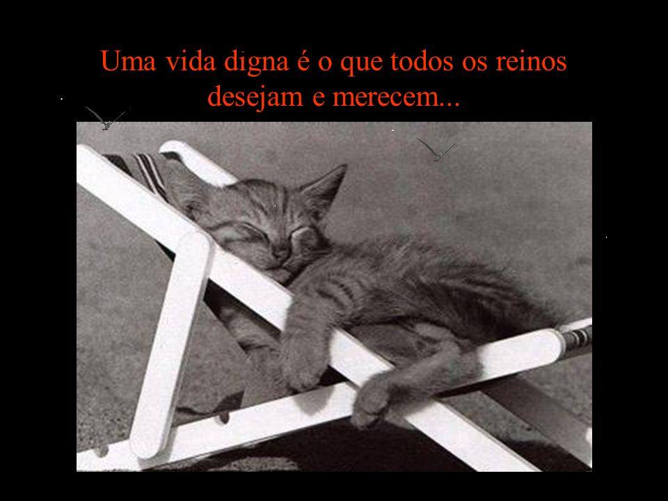 Como nos sentiríamos no lugar deles? Ajude!!! Site : www.suipa.org.br