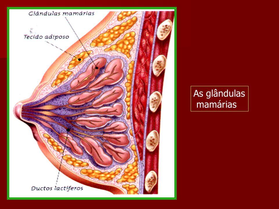 As glândulas endócrinas ou de secreção interna e outras glândulas mistas.