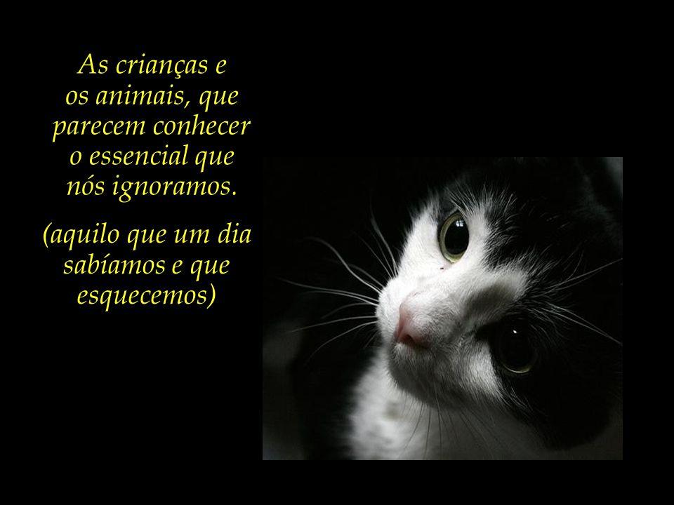Há quem diga que a vida é a ternura genuína e não calculada que se sente diante de animais e crianças.