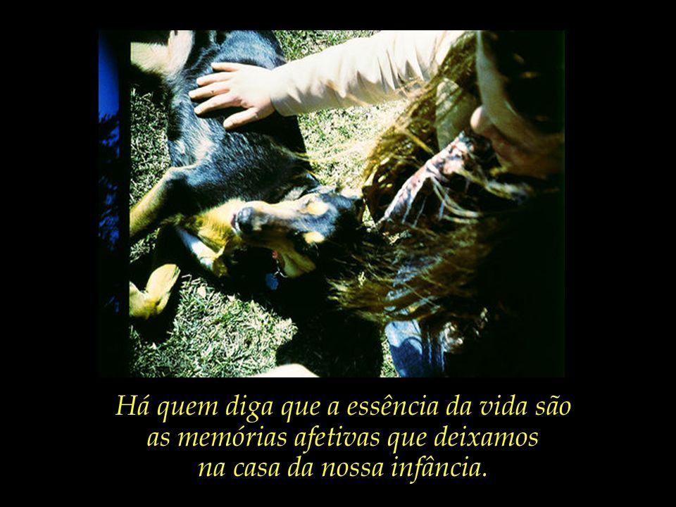 As crianças e os animais, que parecem conhecer o essencial que nós ignoramos.