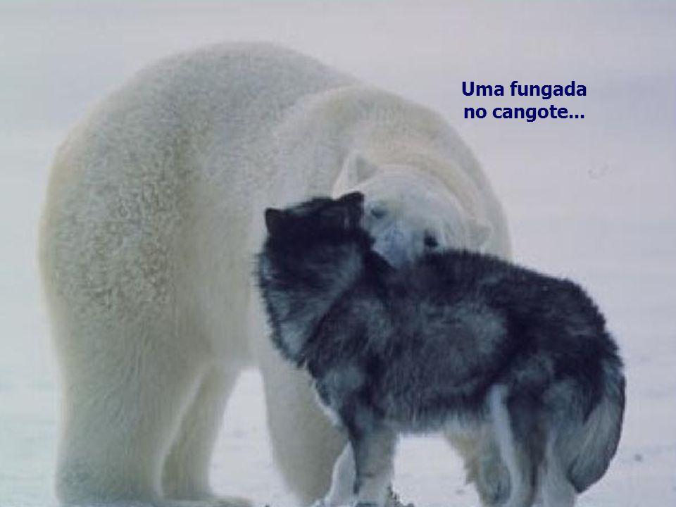 Mas, o inacreditável aconteceu, para a felicidade dos huskies, o urso só queria brincar...