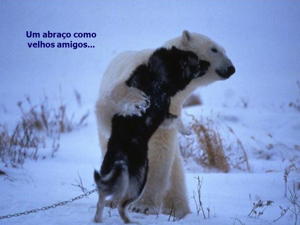 Um abraço como velhos amigos...